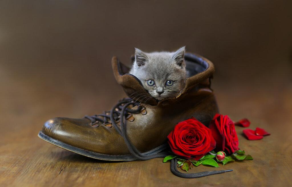 kitten01kl.jpg